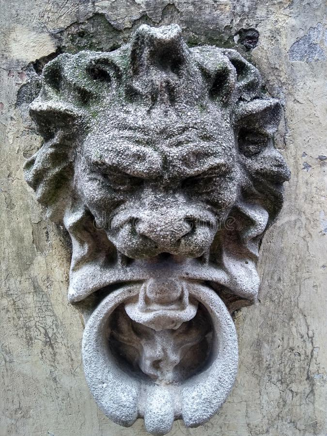 Λιοντάρι στο συμπαγή τοίχο στοκ φωτογραφία