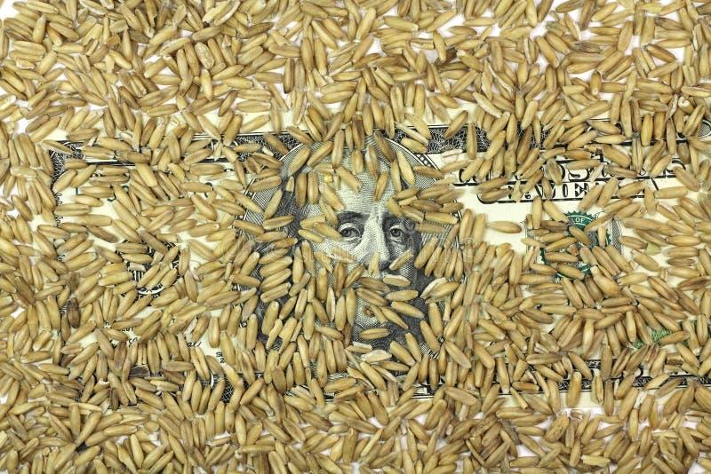 Λογαριασμός εκατό δολαρίων με ένα σιτάρι του υποβάθρου κριθαριού στοκ φωτογραφία με δικαίωμα ελεύθερης χρήσης