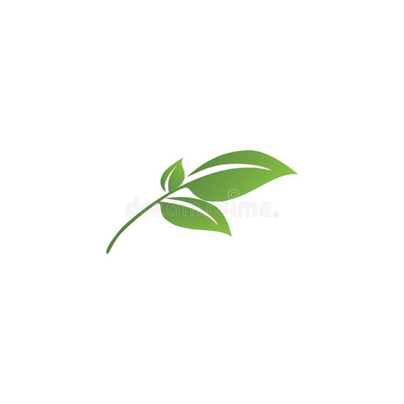 Λογότυπα της πράσινης οικολογίας φύλλων δέντρων ελεύθερη απεικόνιση δικαιώματος