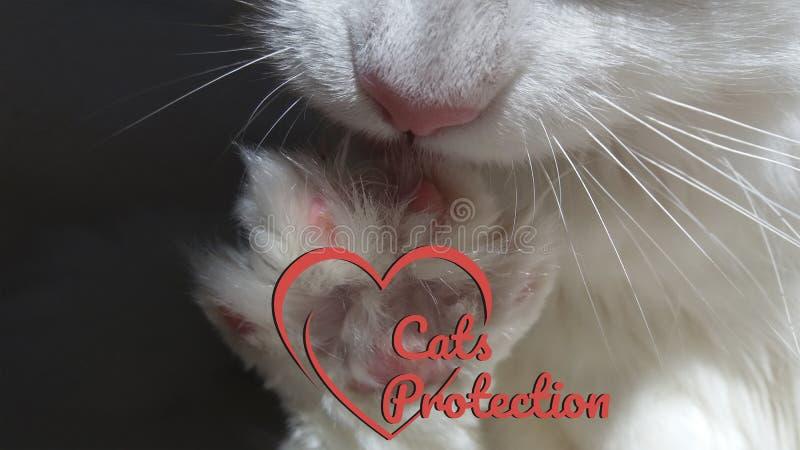 Λογότυπο προστασίας γατών με την άσπρη γάτα ποδιών για τις φιλανθρωπικές οργανώσεις στοκ φωτογραφία με δικαίωμα ελεύθερης χρήσης