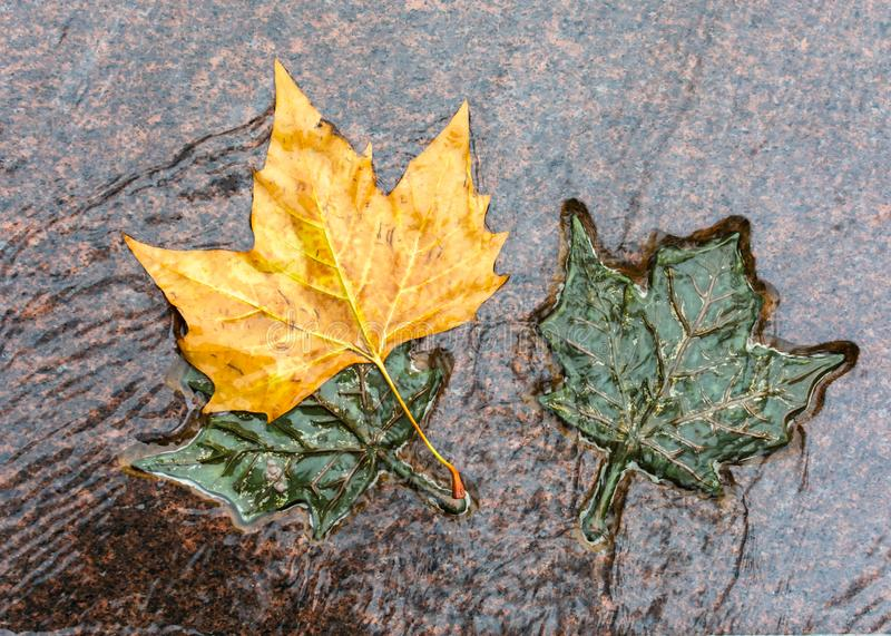 ΛΟΝΔΙΝΟ, ΗΝΩΜΕΝΟ ΒΑΣΊΛΕΙΟ - 25 ΝΟΕΜΒΡΊΟΥ 2018: Χαλκός τρία και φυσικά φύλλα σφενδάμου στο μνημείο του Καναδά στο πράσινο πάρκο στοκ φωτογραφίες