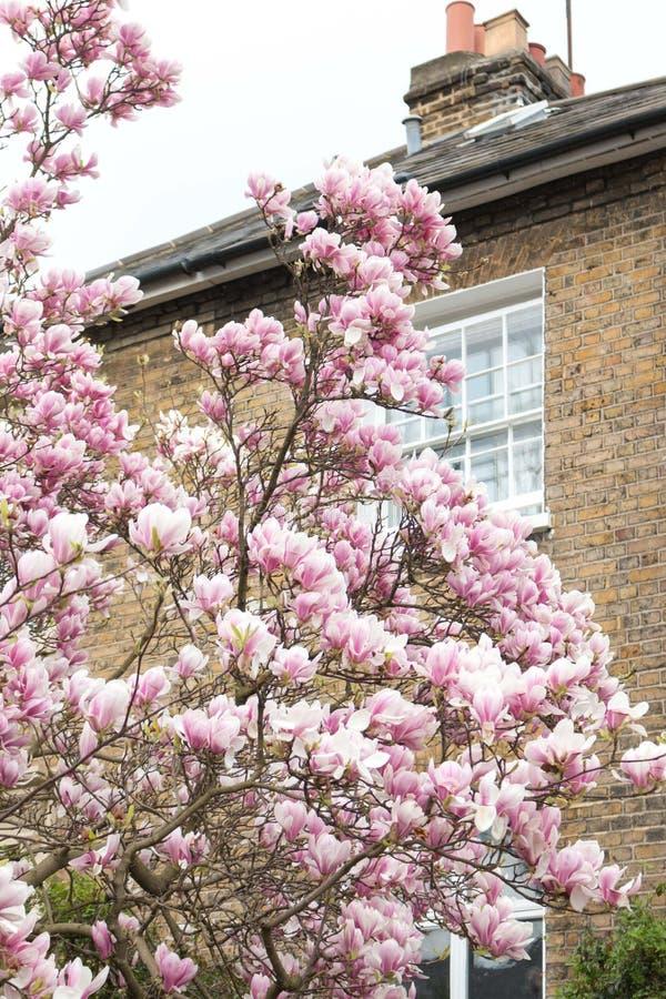 Λονδίνο στην άνθιση στοκ εικόνες