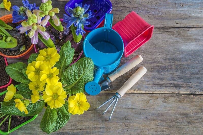 Λουλούδια άνοιξη και εργαλεία κηπουρικής στις παλαιές σανίδες στοκ φωτογραφία με δικαίωμα ελεύθερης χρήσης