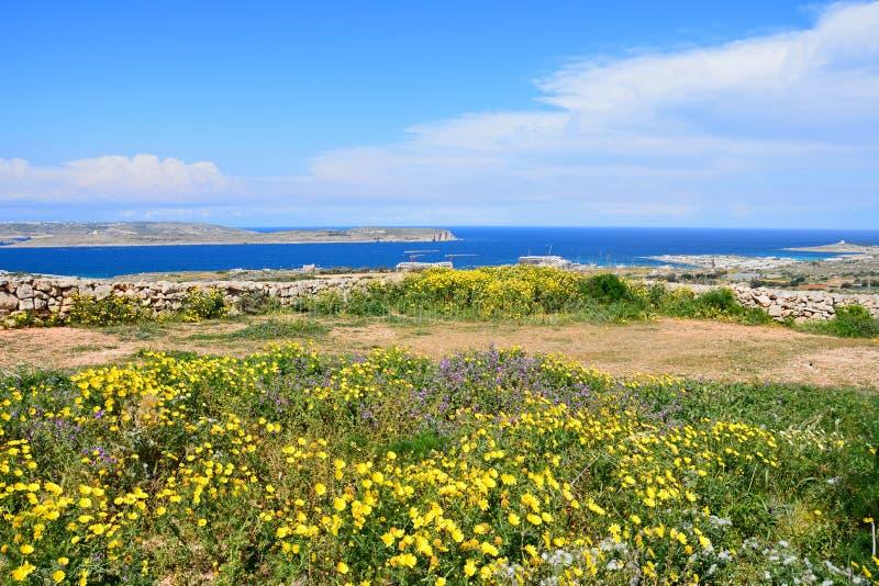 Λουλούδια άνοιξη κατά μήκος της ακτής, Mellieha στοκ φωτογραφία με δικαίωμα ελεύθερης χρήσης