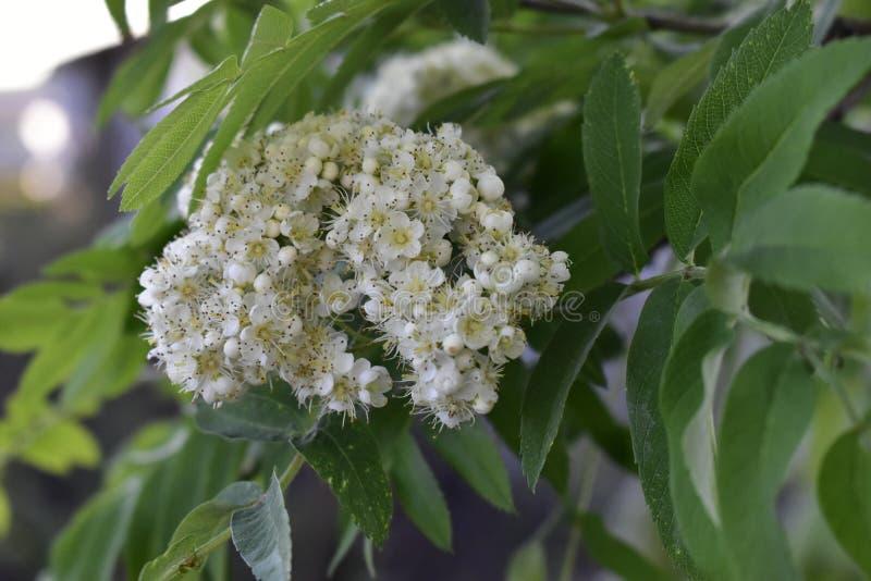 Λουλούδια άνοιξη στα δέντρα και τις εγκαταστάσεις στοκ εικόνα