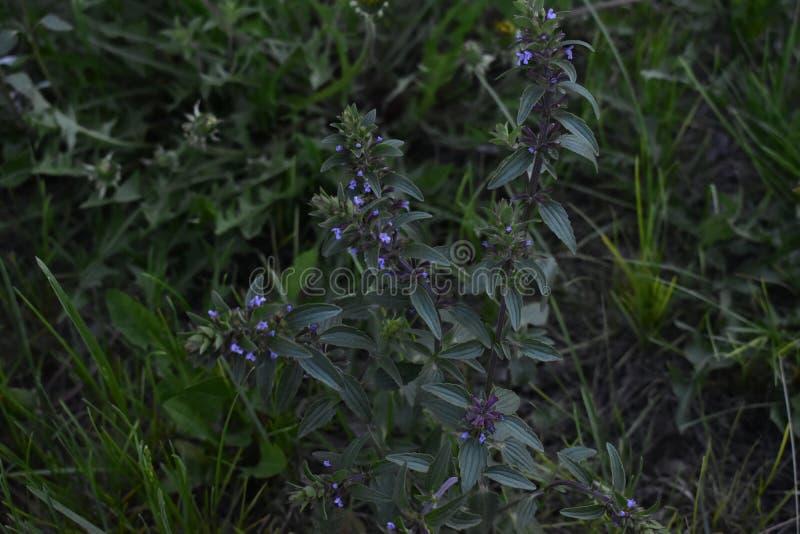 Λουλούδια άνοιξη στα δέντρα και τις εγκαταστάσεις στοκ φωτογραφία με δικαίωμα ελεύθερης χρήσης