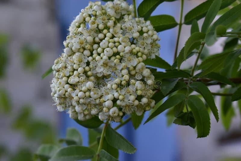 Λουλούδια άνοιξη στα δέντρα και τις εγκαταστάσεις στοκ φωτογραφίες