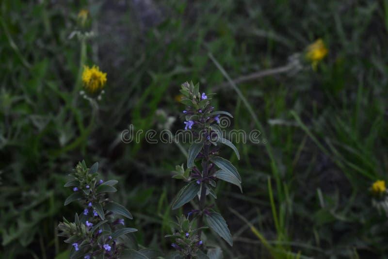 Λουλούδια άνοιξη στα δέντρα και τις εγκαταστάσεις στοκ εικόνα με δικαίωμα ελεύθερης χρήσης