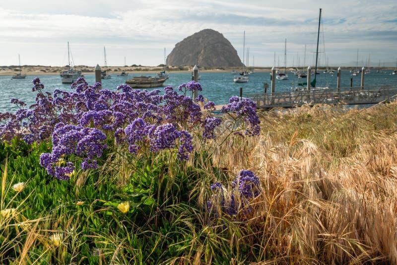 Λουλούδια, έξοχη εποχή άνθισης στο κρατικό πάρκο κόλπων Morro στοκ φωτογραφία με δικαίωμα ελεύθερης χρήσης