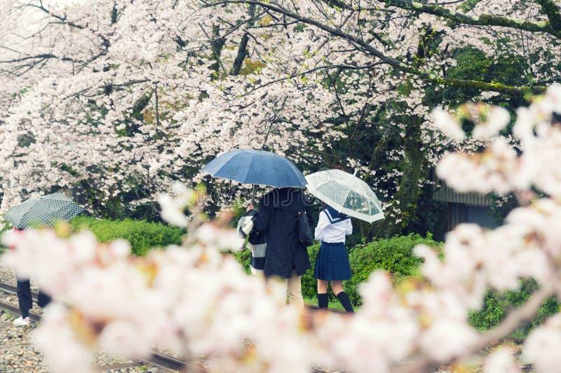 Λουλούδια ανθών κερασιών στον κήπο με πολλούς ανθρώπους στο Κιότο, Japa στοκ φωτογραφία