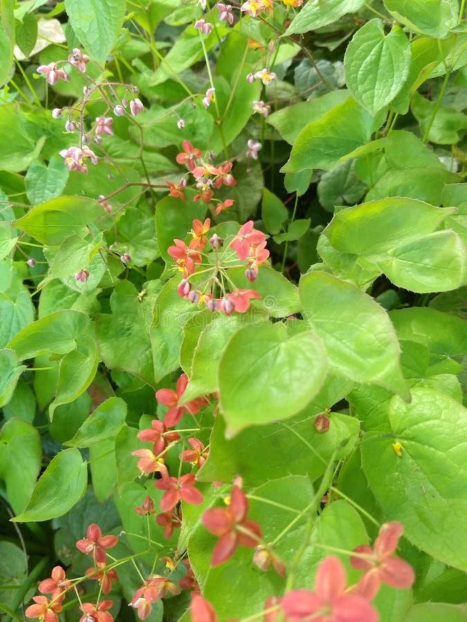 Λουλούδια από το lissa στοκ εικόνα