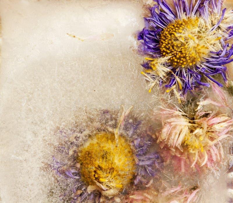 Λουλούδια από όμορφα χρώματα κολλημένα στον πάγο στοκ φωτογραφία με δικαίωμα ελεύθερης χρήσης
