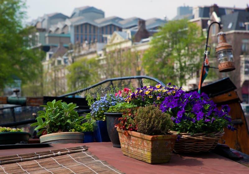 λουλούδια βαρκών του Άμστερνταμ στοκ εικόνα
