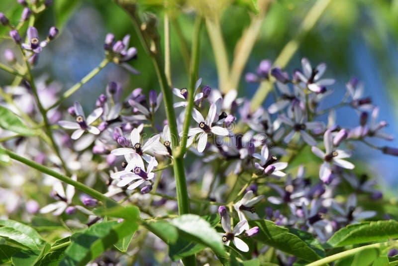 Λουλούδια δέντρων χαντρών στοκ φωτογραφίες