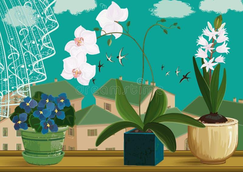 Λουλούδια δωματίων διανυσματική απεικόνιση