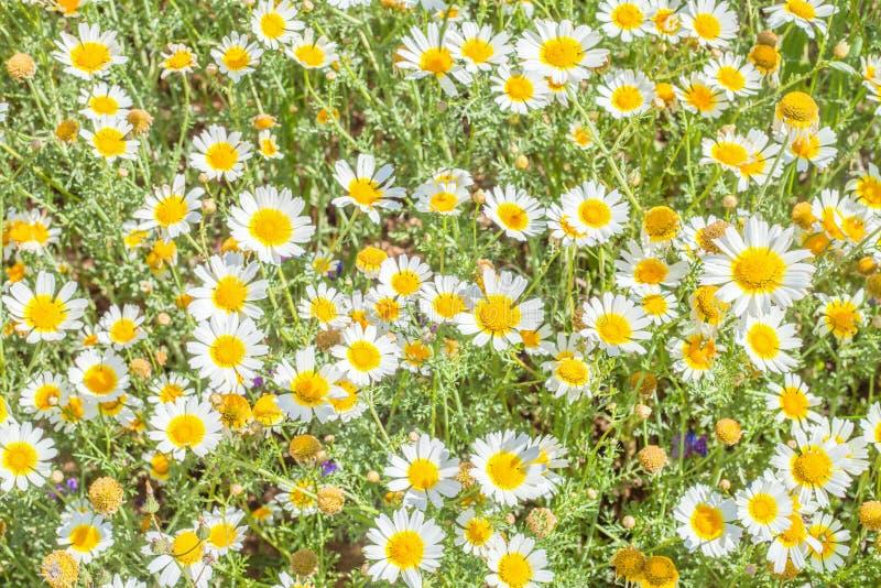 Λουλούδια εξεδρών στον τομέα στοκ φωτογραφία