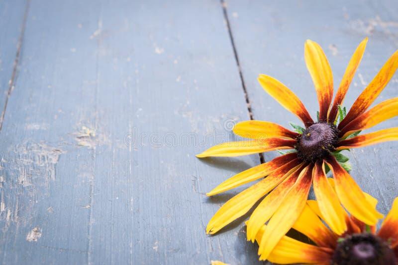 Λουλούδια κήπων πέρα από το μπλε ξύλινο επιτραπέζιο υπόβαθρο Σκηνικό με το διάστημα αντιγράφων στοκ εικόνες