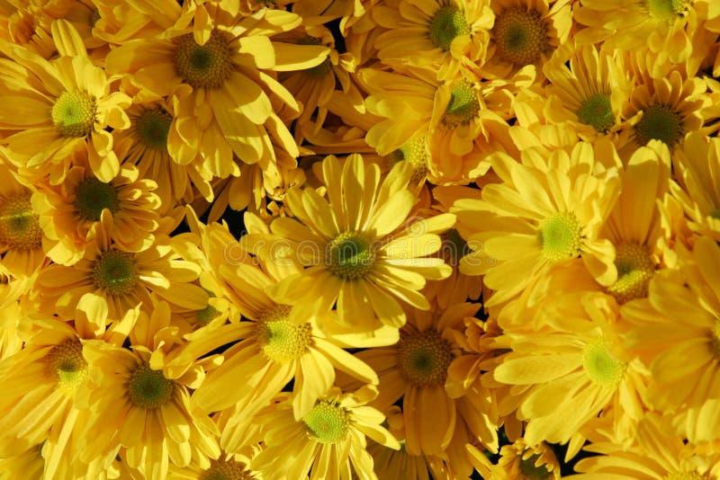 Download λουλούδια κίτρινα στοκ εικόνα. εικόνα από οκτώβριος, οίστρο - 1525185