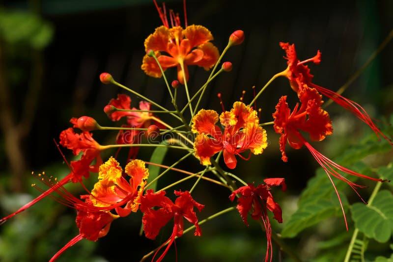 Λουλούδια και άνθη από τη Σρι Λάνκα στοκ φωτογραφία