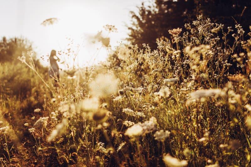 Λουλούδια και γλυκάνισο της Daisy που ανθίζουν στο φως του ήλιου βραδιού με τη γυναίκα στοκ εικόνα με δικαίωμα ελεύθερης χρήσης