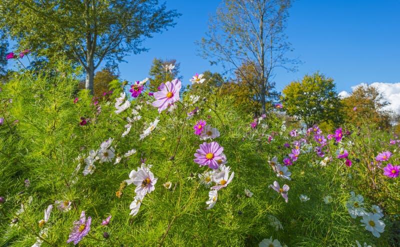 Λουλούδια και δέντρα σε έναν τομέα στα χρώματα φθινοπώρου στον ήλιο στην πτώση στοκ εικόνες