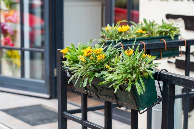 Λουλούδια και δοχείο στις σκάφες στοκ φωτογραφία με δικαίωμα ελεύθερης χρήσης