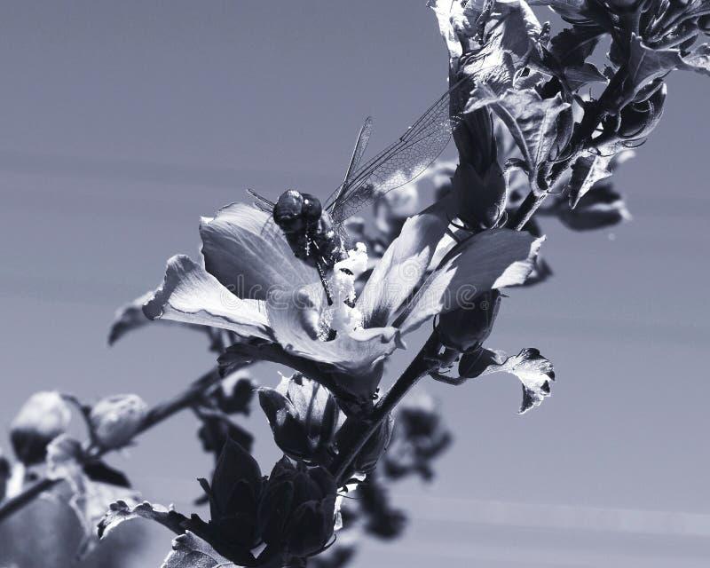 λουλούδια και δράκος flys στοκ εικόνες
