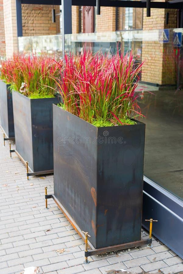 Λουλούδια και εγκαταστάσεις flowerpots και σκάφες στο σχέδιο στοκ φωτογραφίες