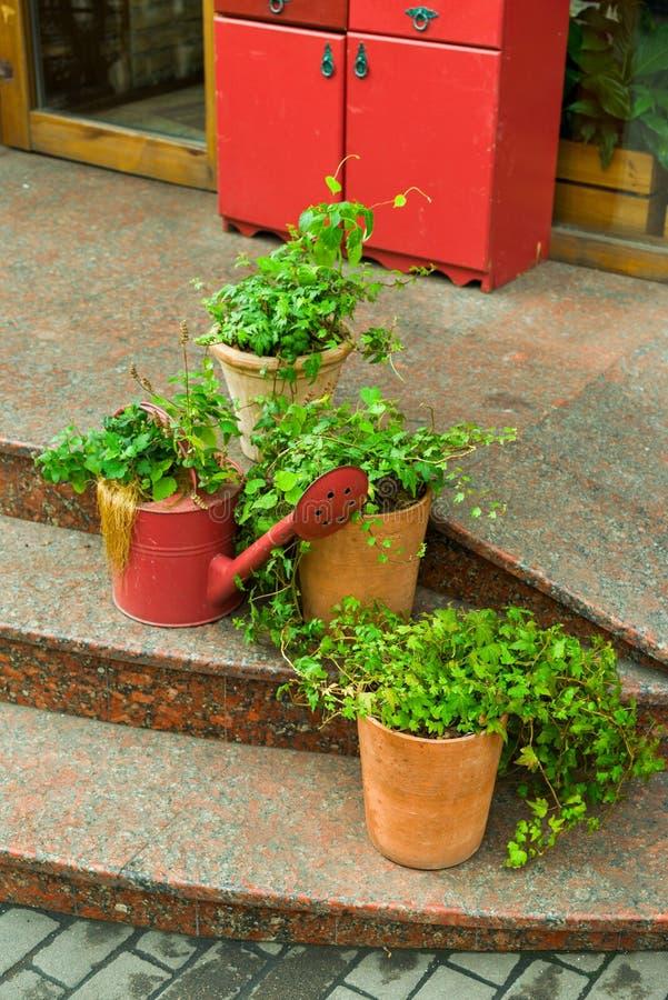 Λουλούδια και εγκαταστάσεις flowerpots και σκάφες στο σχέδιο στοκ εικόνα με δικαίωμα ελεύθερης χρήσης