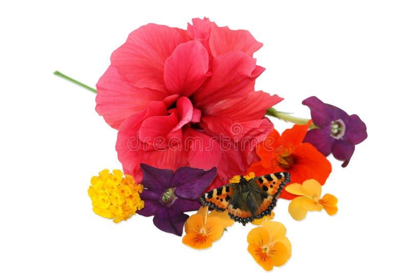 Λουλούδια και πεταλούδα στοκ φωτογραφίες με δικαίωμα ελεύθερης χρήσης