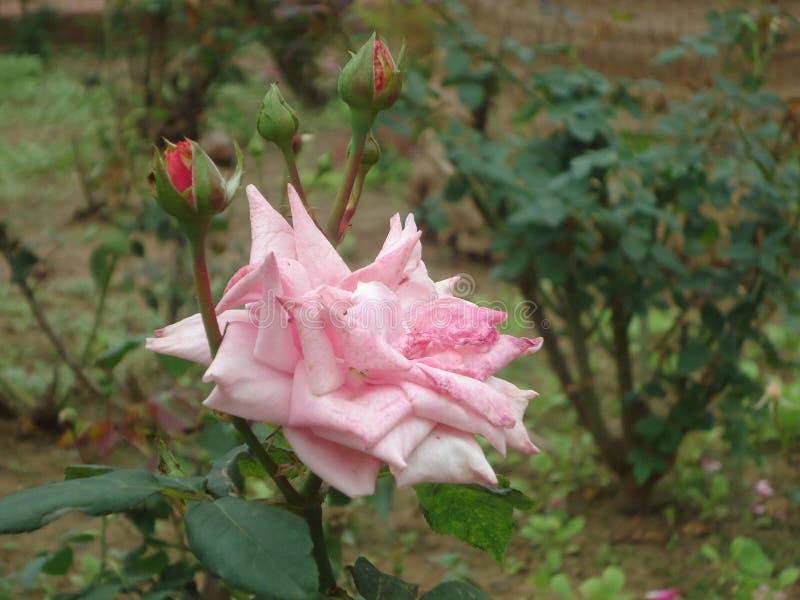 Λουλούδια και χαριτωμένος στοκ φωτογραφίες