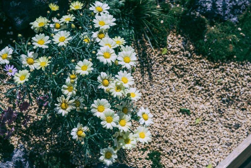 Λουλούδια με ένα περιβάλλον της άγνοιας στη μνήμη απεικόνιση αποθεμάτων