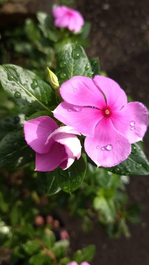 Λουλούδια με το ροζ στοκ εικόνα