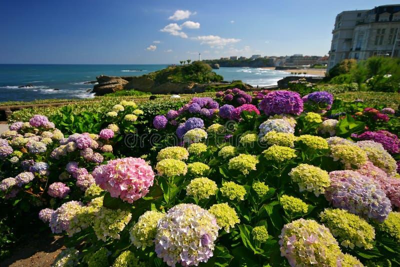 λουλούδια Μπιαρίτζ στοκ εικόνες με δικαίωμα ελεύθερης χρήσης