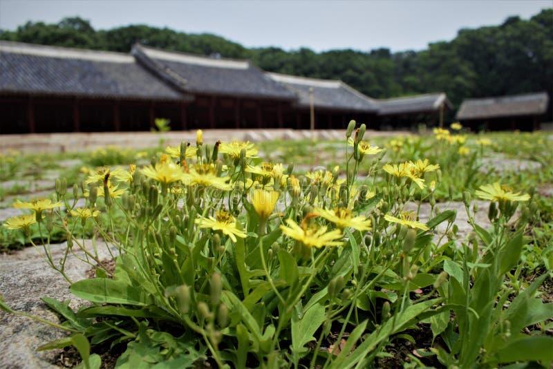 Λουλούδια μπροστά από την αίθουσα Yeongnyeongjeon της προγονικής λάρνακας Jongmyo στη Σεούλ, Κορέα στοκ εικόνες
