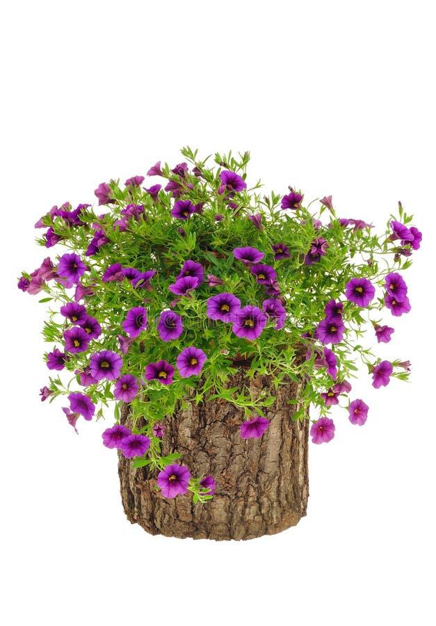λουλούδια πέρα από το λε&u στοκ φωτογραφία με δικαίωμα ελεύθερης χρήσης