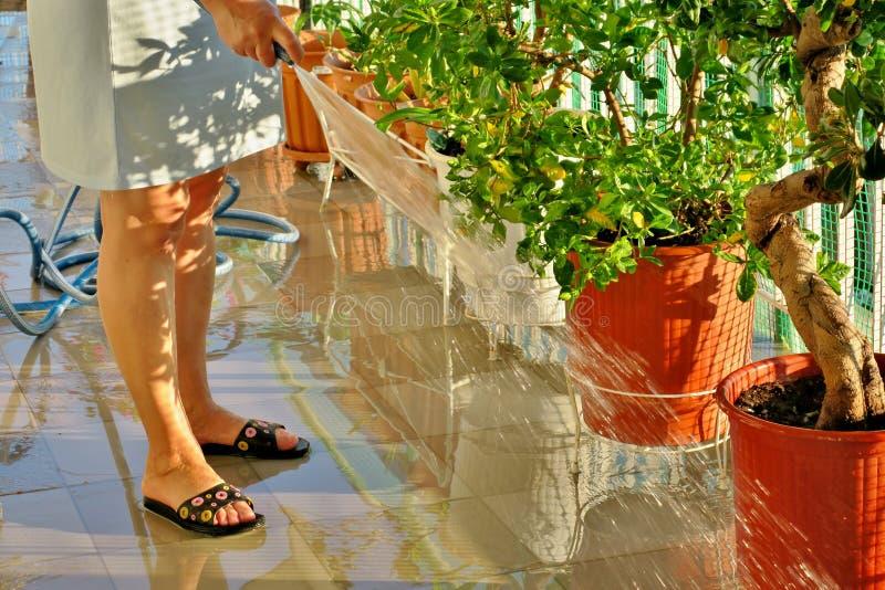 Λουλούδια ποτίσματος γυναικών στο μπαλκόνι στοκ φωτογραφίες