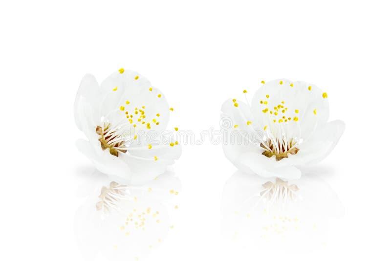 λουλούδια που απομονών στοκ εικόνες