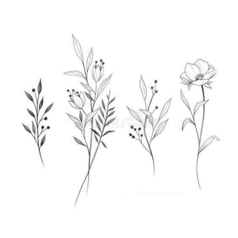 Λουλούδια που επισύρουν την προσοχή με την γραμμή-τέχνη στα άσπρα υπόβαθρα απεικόνιση αποθεμάτων
