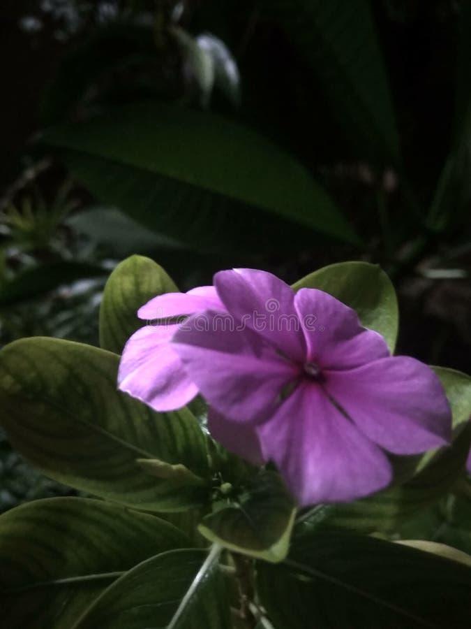 Λουλούδια που παραμένουν όμορφα τη νύχτα στοκ φωτογραφία