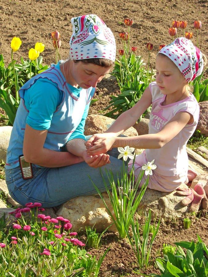 λουλούδια που σπέρνου&nu στοκ φωτογραφία