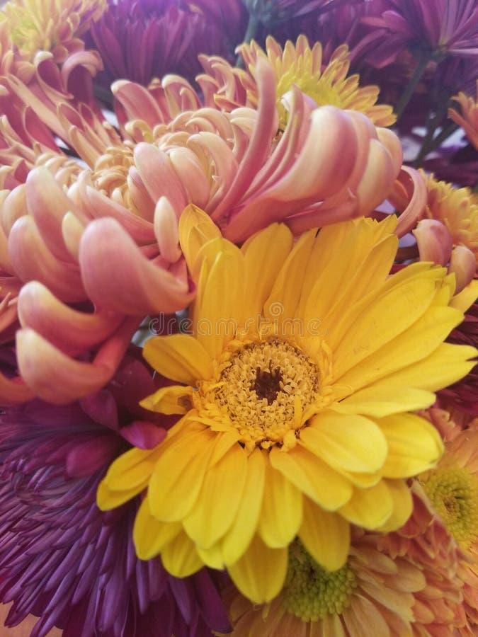 Λουλούδια πτώσης στοκ εικόνες
