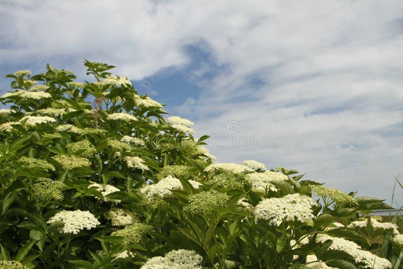 Λουλούδια σε ένα λιβάδι στη Δανία στοκ φωτογραφία