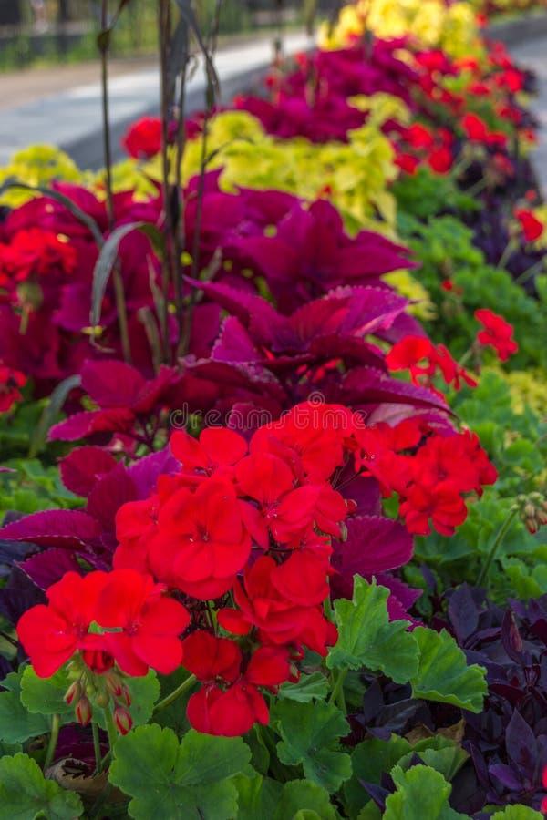 Λουλούδια σε ένα πάρκο στην Οττάβα Καναδάς στοκ εικόνες με δικαίωμα ελεύθερης χρήσης