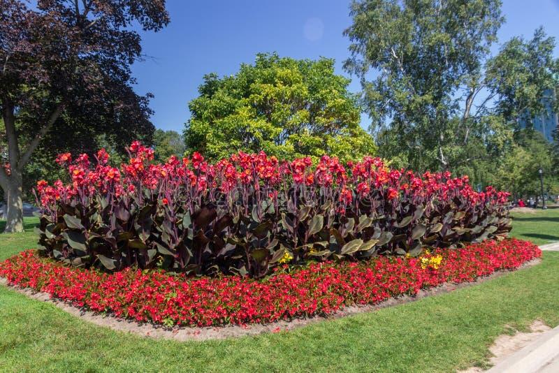 Λουλούδια σε ένα πάρκο σε Niagara Καναδάς στοκ φωτογραφία με δικαίωμα ελεύθερης χρήσης