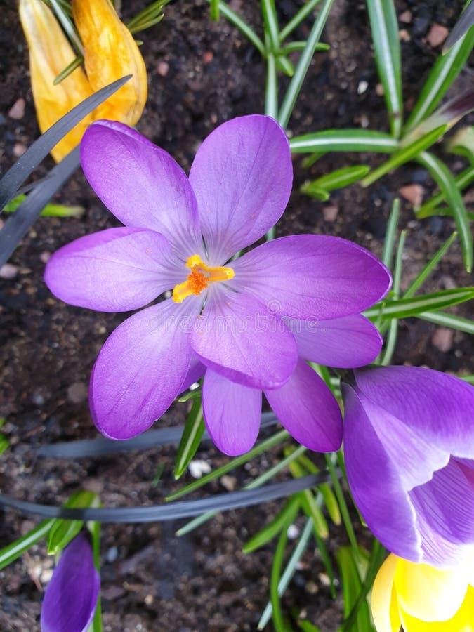 Λουλούδια στην άνθιση στοκ εικόνα