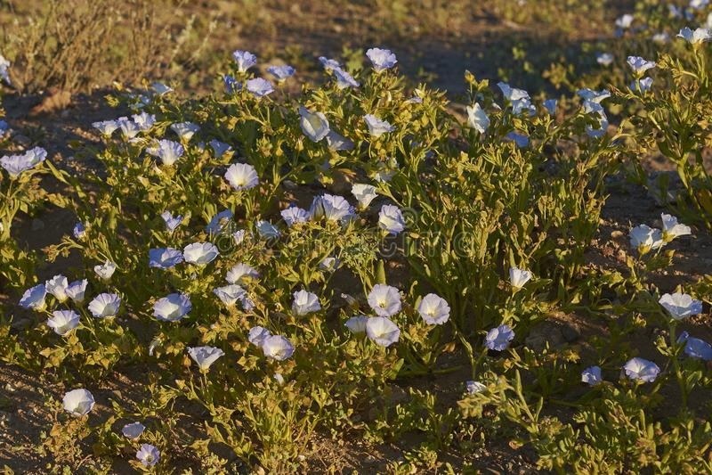 λουλούδια για πρώιμη dating