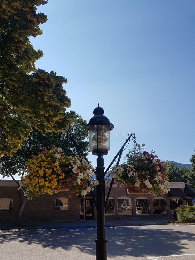 Λουλούδια στη θέση λαμπτήρων στοκ φωτογραφίες με δικαίωμα ελεύθερης χρήσης