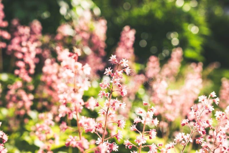 Λουλούδια στη θερινή νύχτα στοκ φωτογραφία