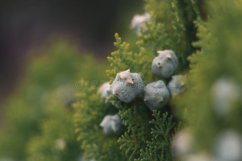 Λουλούδια στη μακροεντολή στοκ εικόνα